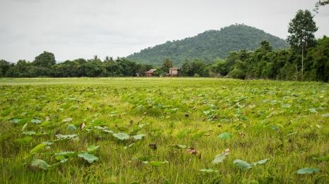 Cambodge siem reap 24
