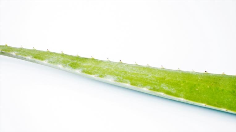 Aloe vera recette (8)